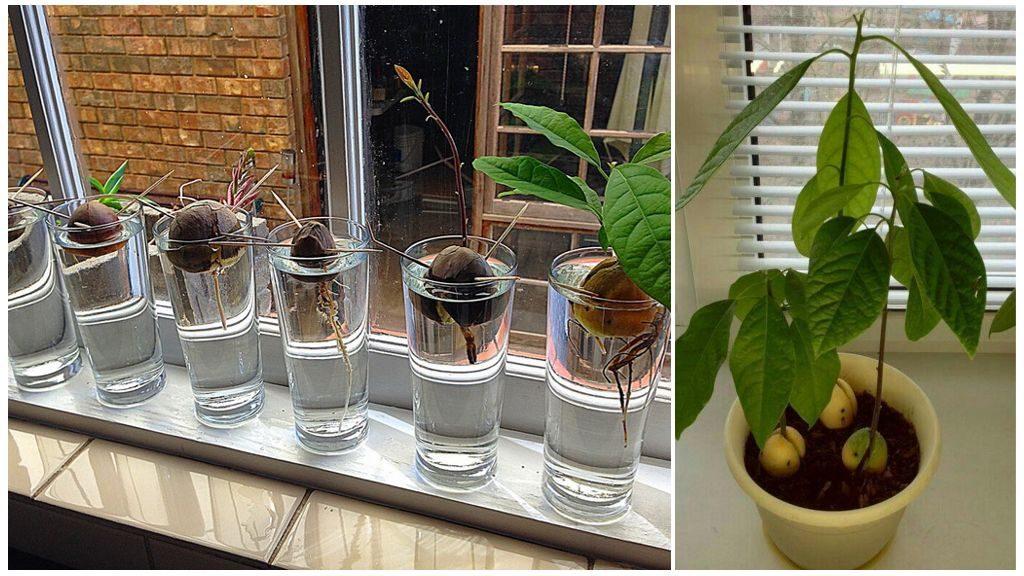 Освещение для авокадо