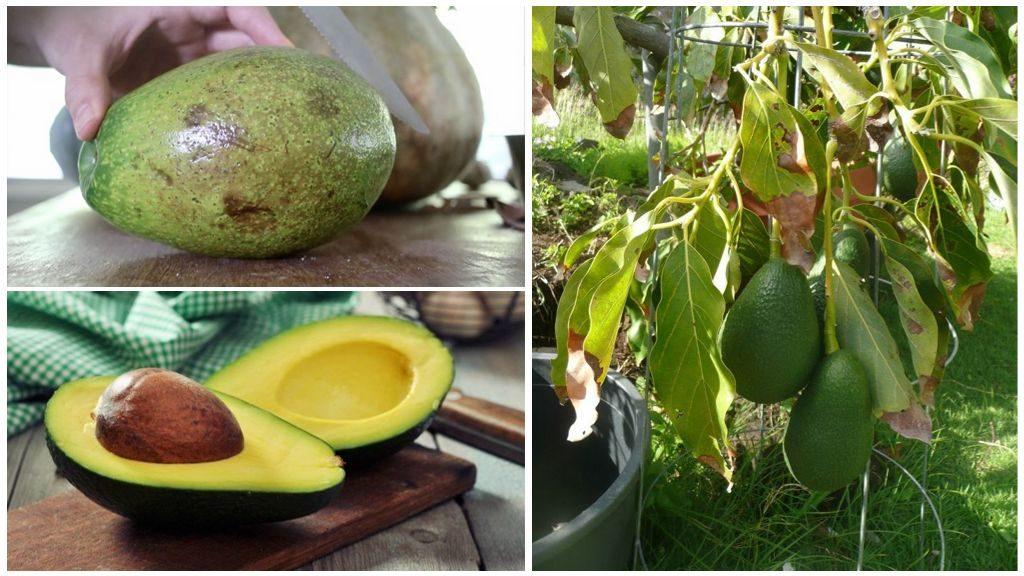 Извлечение косточки из авокадо