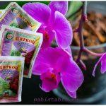 Циркон для орхидей: применение, дозировка