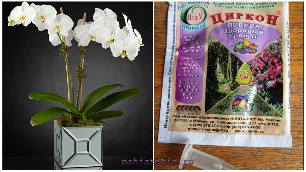 Циркон для орхидей