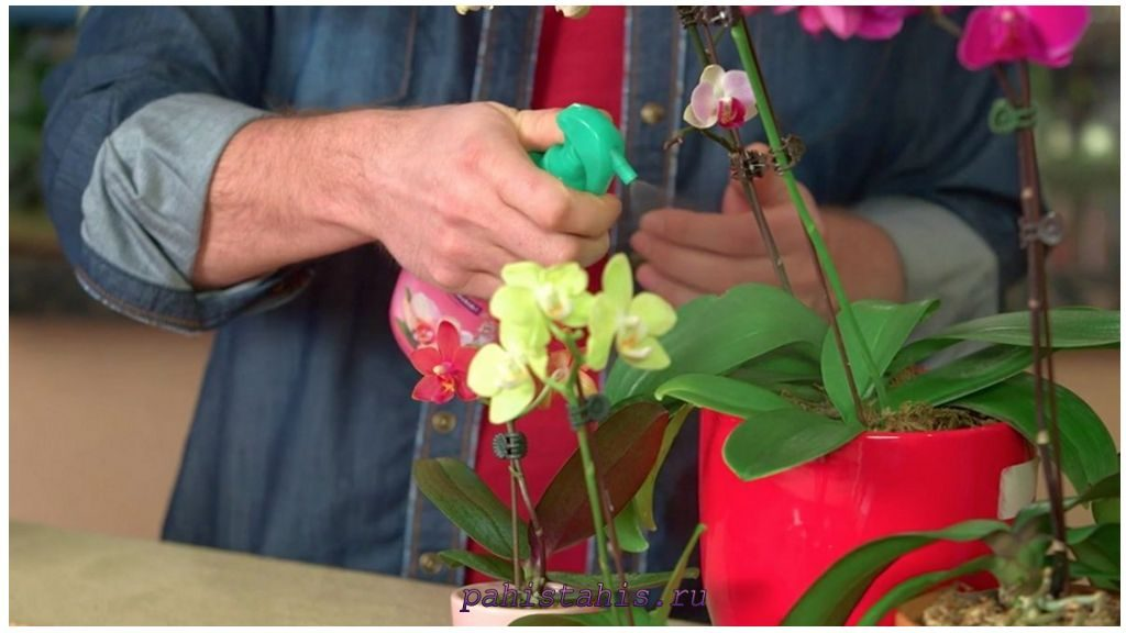 Внекорневая обработка орхидеи