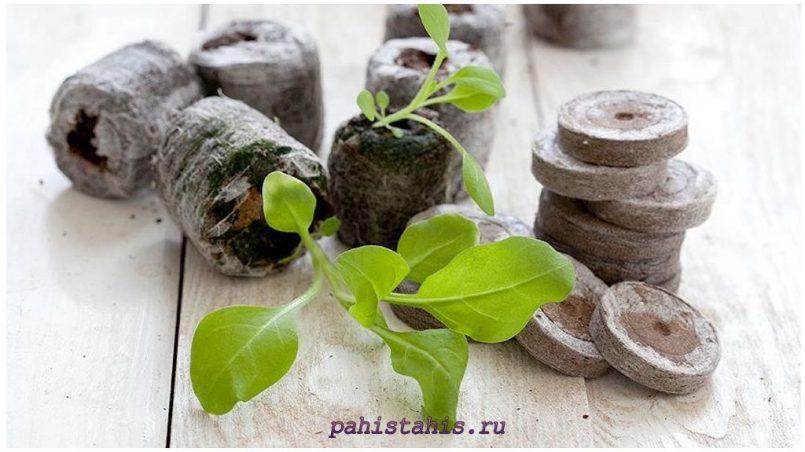 Высадка петунии в торфяные таблетки
