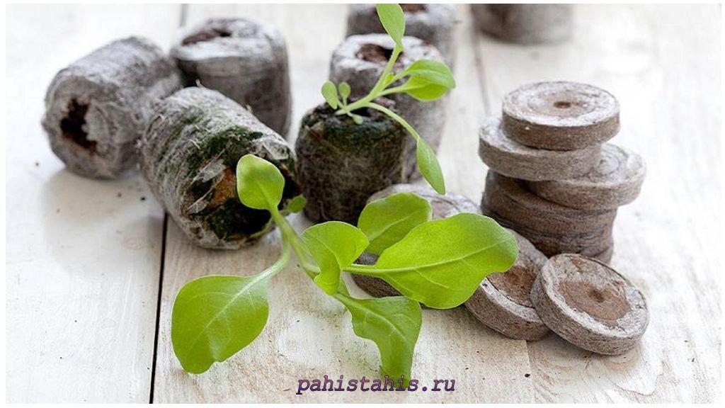 семена клубники в торфяные таблетки
