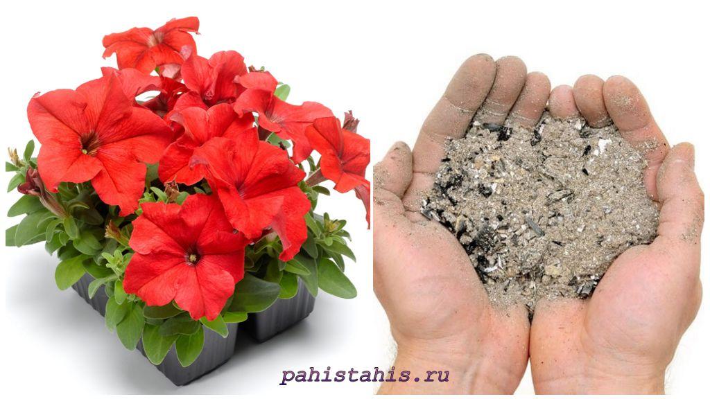 Подкормка петунии для пышного цветения