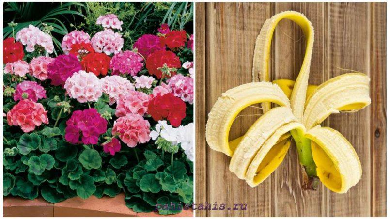 Подкормка из банановой кожуры для герани