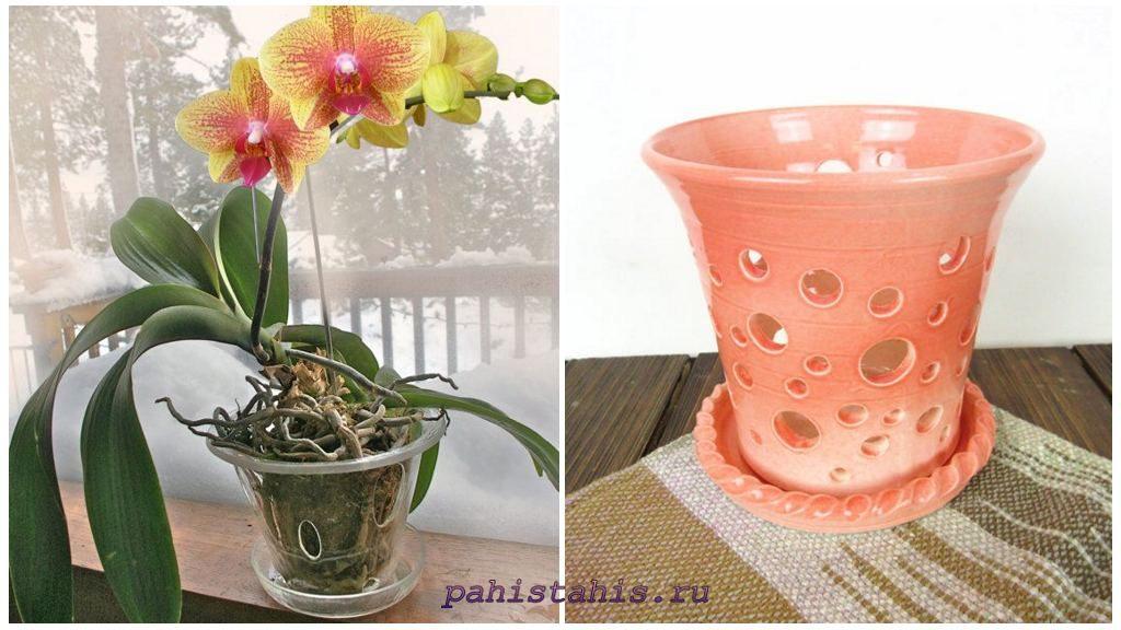 Выбор гошка для орхидеи