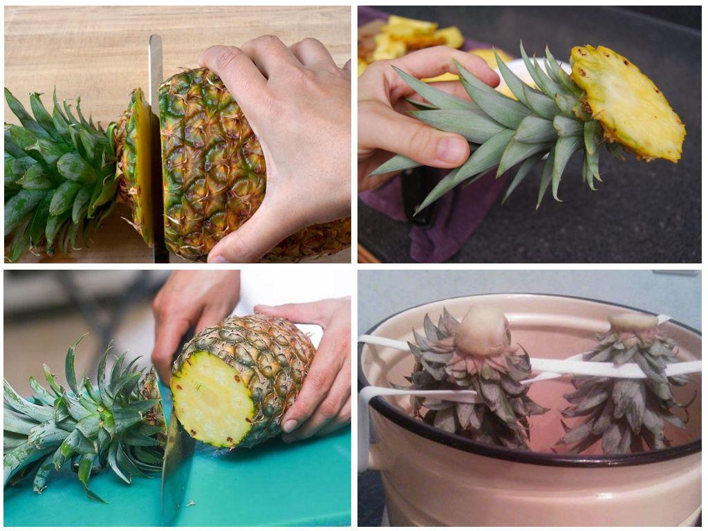 Процесс посадки ананаса