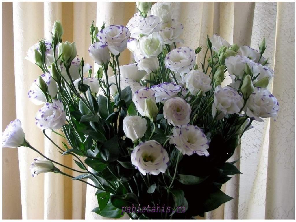 Букет цветов эустома