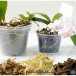 Субстрат для орхидей и его компоненты