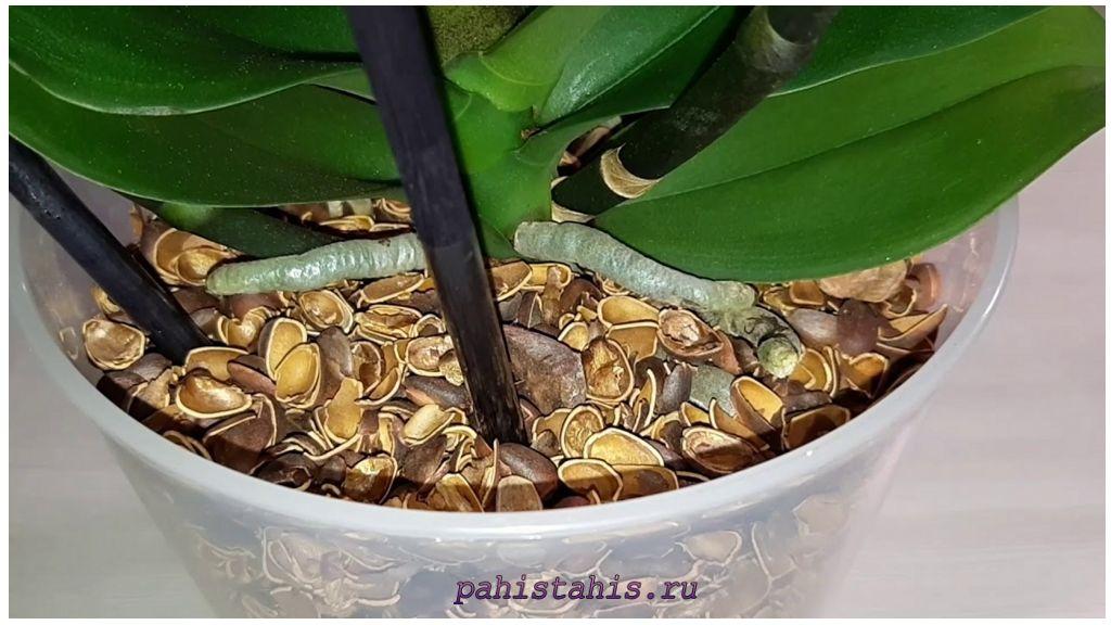 Скорлупа орехов для орхидей