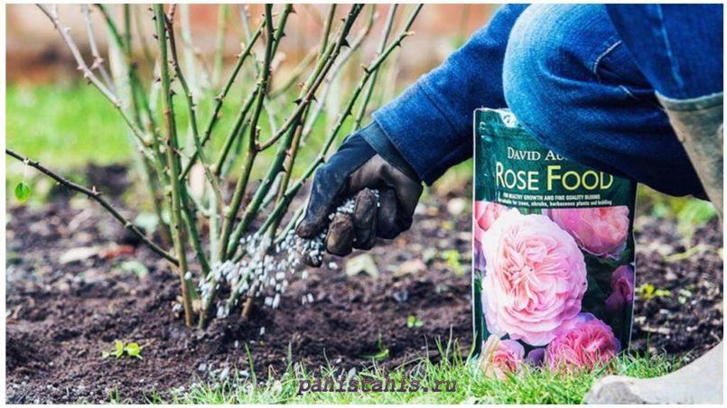 удобрение роза отзывы